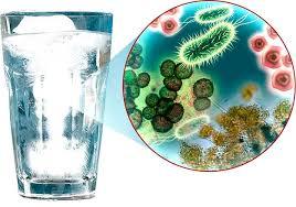 Микроорганизмы в воде